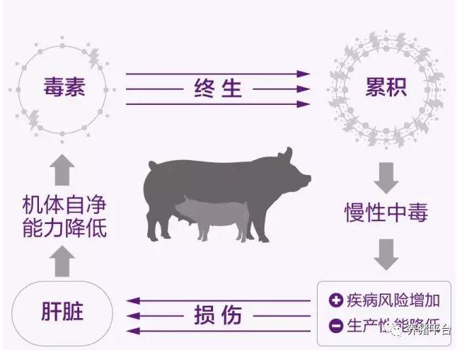 母猪秋季保健药 龙昌胆汁酸 保?#38395;?#27602; 提高免疫力 抗应激