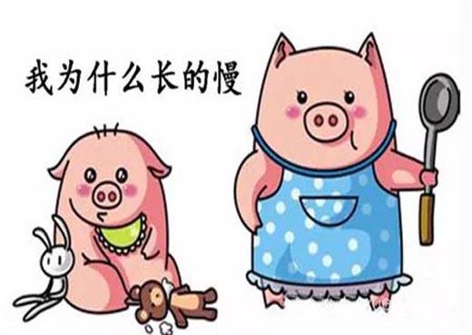 都是啥原因导致猪的生长缓慢