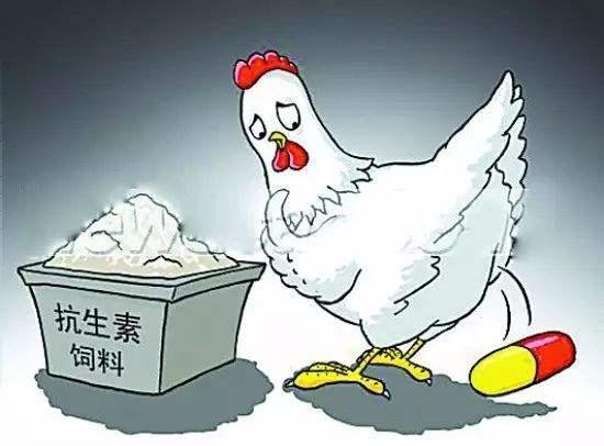 蛋雞飼料添加劑 龍昌膽汁酸 防治蛋雞肝膽病 提高蛋雞產蛋率