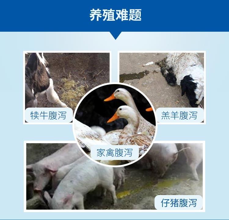 健肠宝水溶性-详情页_02.jpg