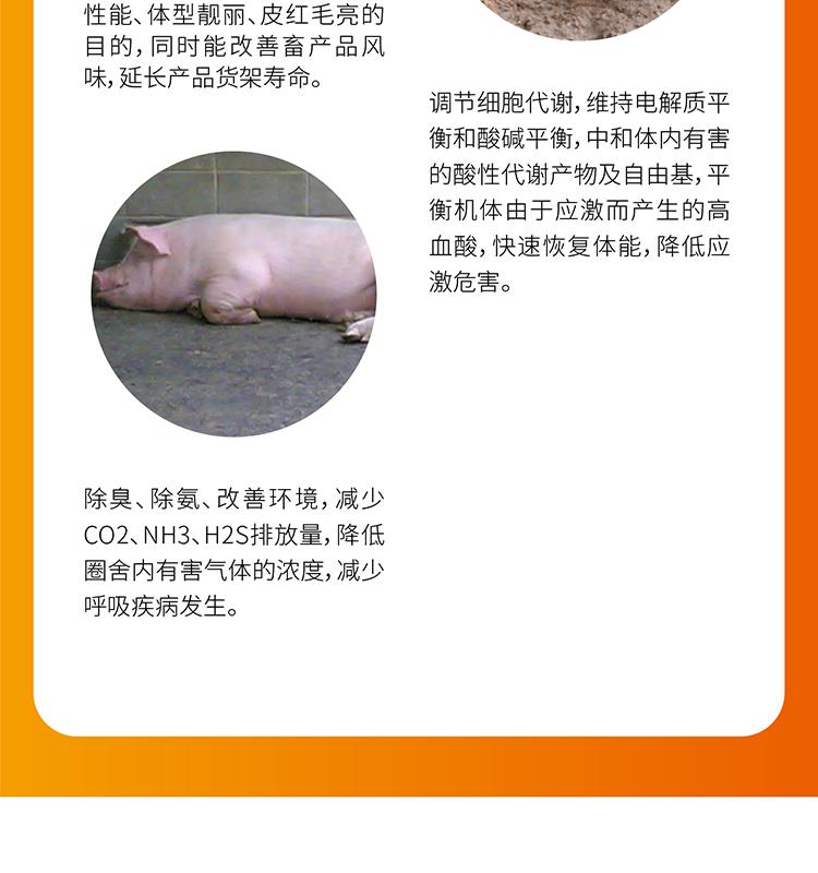 敖众速肥_05.jpg