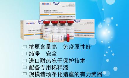 豬瘟活疫苗(細胞源)