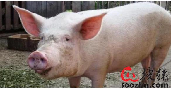 官方解答:养猪办理手续
