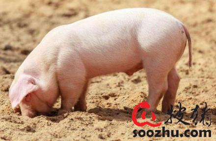 北京市非洲猪瘟疫情有奖举报电话
